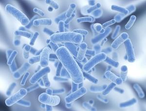 probioticelor12