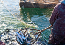 cote, acvatice, pescuit, delta dunarii, agricultura ecologica