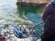 acvacultură 10