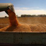 cereale, competivitatea, integral, grau