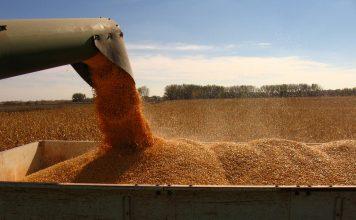 cereale, competivitatea, integral