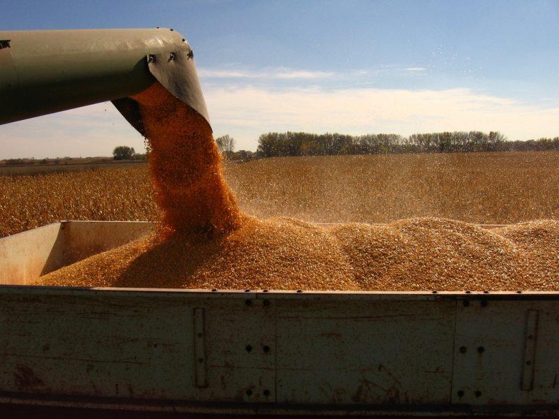 cereale, competivitatea