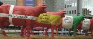 Producatorii de lactate au luat machete de vaci la Bruxelles ca parte a protestului lor.