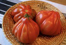 sprijin pentru tomate